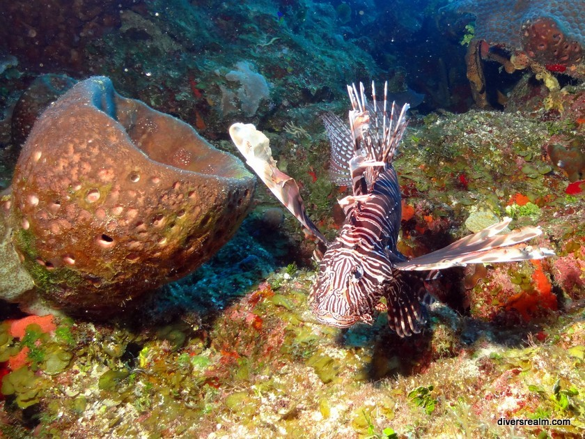 Diving Turks and Caicos
